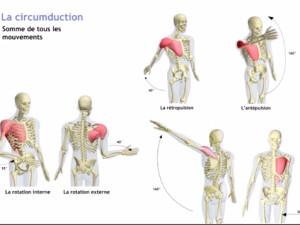 Série de videos mouvements muscles épaule
